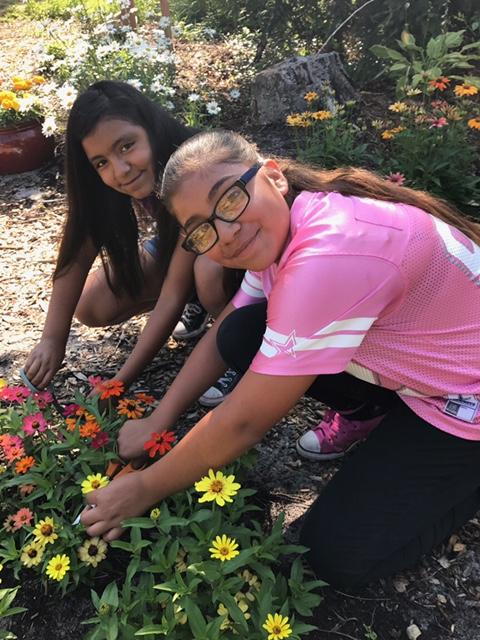 LCP Cut Flower Program